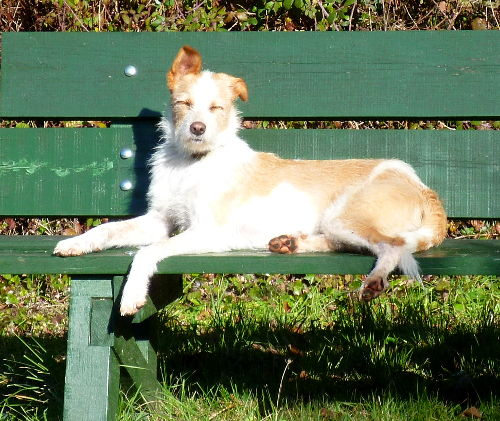Betty sunning herself on the bench