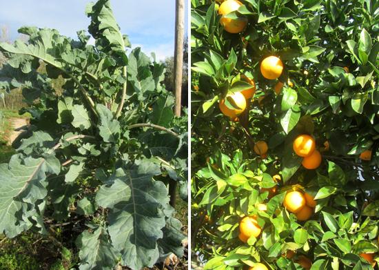psb-oranges