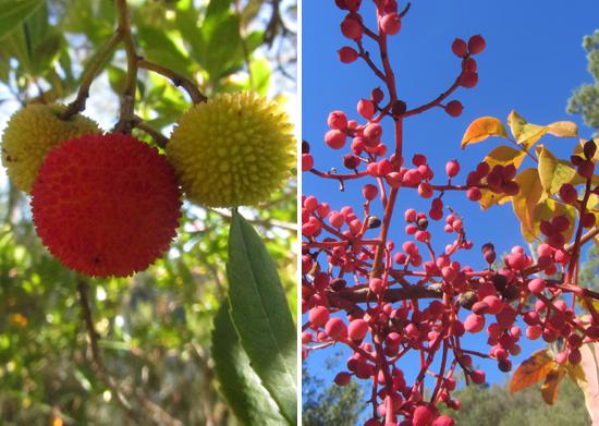 wild-fruit